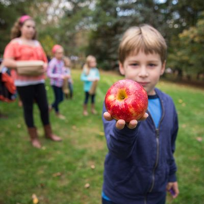 History & Harvest Celebration at Greenwood Gardens