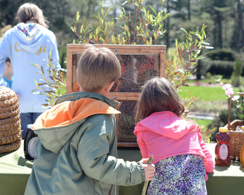 Greenwood Bee Day 2014