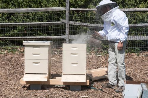 Greenwood beehives_03_blog